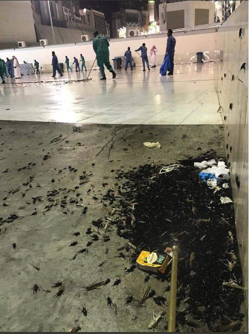 صور: اسراب من الحشرات تهاجم الحرم المكي