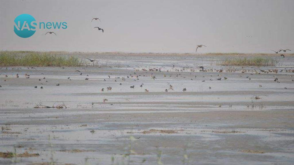 صور مبهرة لهور الدلمج هذا اليوم واستعدادات لإعلانه محمية طبيعية