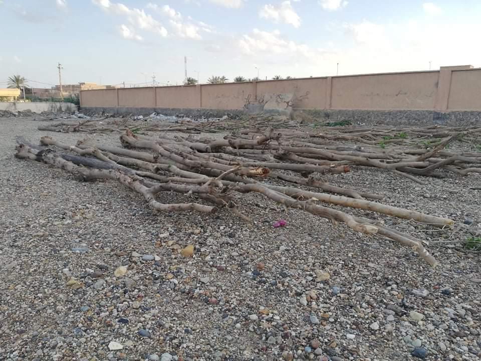 بأخشاب التوث وإشراف مختصين .. هيت تبدأ حملة واسعة لإعادة تأهيل نواعيرها (صور)