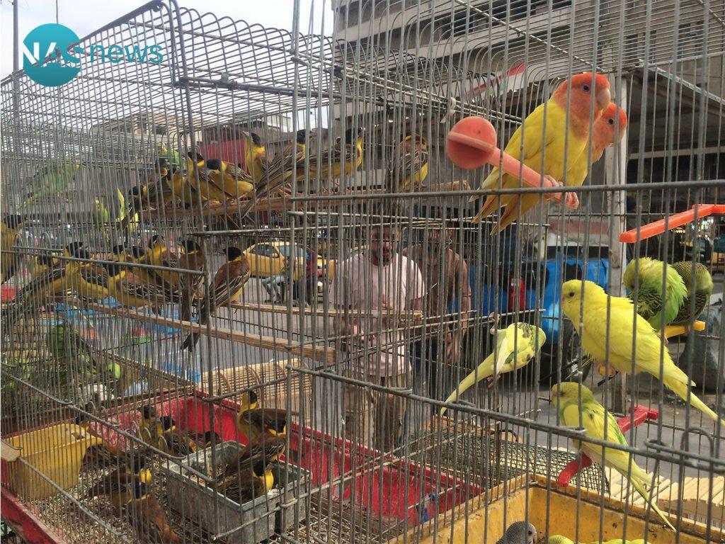 """مشاهدات من سوق الغزل: ديك فرنسي """"يسيء التهذيب"""" مع بطة هولندية.. وطيور حُب """"مثليّة""""!"""