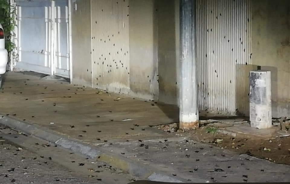 صور: موجة من الخنافس تغزو مدناً في الأنبار.. وسكان يغادرون منازلهم!