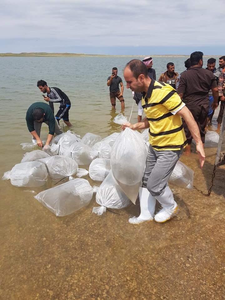 """صور: 11 مليون إصبعية من مفاقس أسماك واسط لتعويض """"النفوق الكبير"""""""