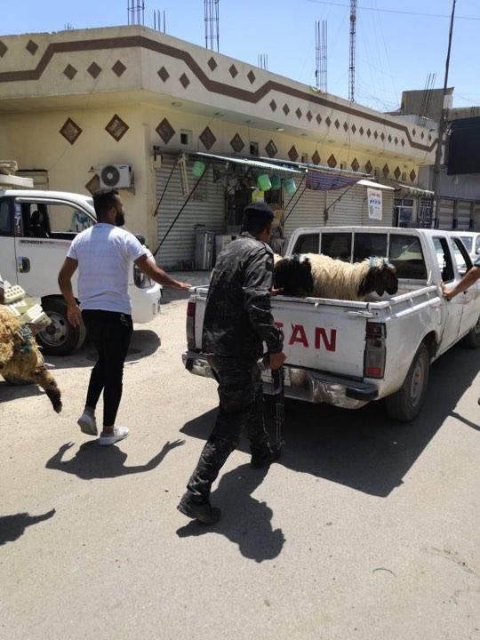 أمانة بغداد تطلق حملة لملاحقة الأغنام شمالي العاصمة (صورة)