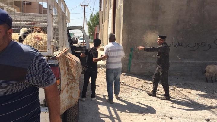 أمانة بغداد تنفذ حملة لمصادرة الأغنام شرق العاصمة (صور)