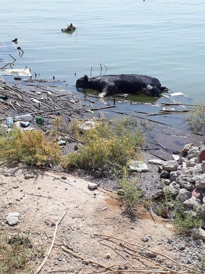 """(صور) حيوانات نافقة ونفايات تسدُّ أنف أهالي راوة.. و""""الكَصاصيب"""" لا يكترثون!"""