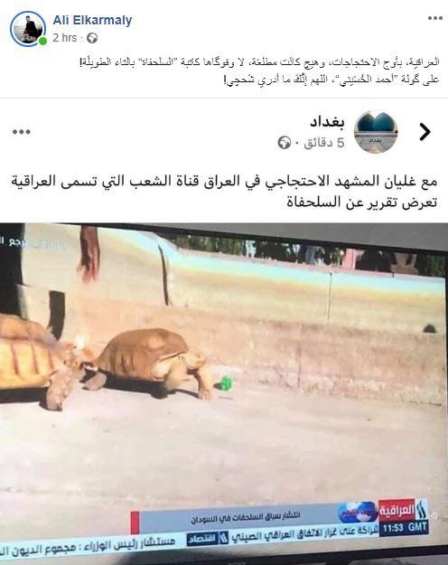 """القناة الرسمية تبث تقريراً عن """"سباق السلاحف"""" وتثير موجة غضب وسخرية!"""