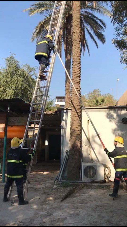 """الدفاع المدني العراقي ينقذ قطة كانت """"تئن من الجوع"""" أعلى شجرة! (فيديو)"""